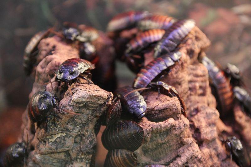 Significado de los sueños con Cucarachas