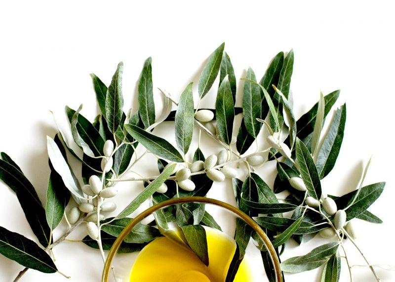 Las hojas de olivo ayudan al dolor de estómago